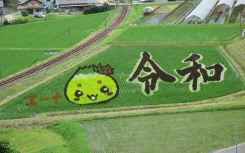 田んぼdeアート見ごろです!